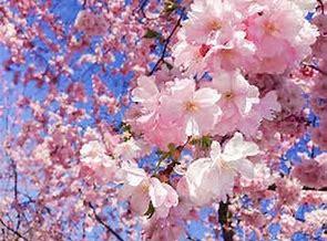 3/21 春分、満月、新しい一年の始まり