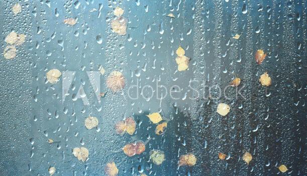 明日10月17日芝生ヨガ【雨予報の為中止】します。
